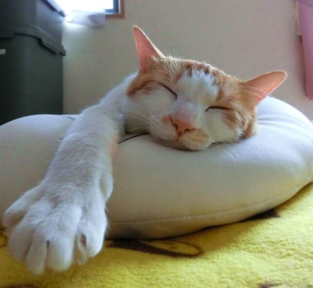 最近は猫ブーム