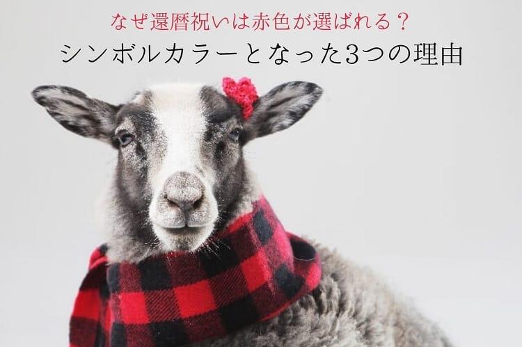 赤と黒のチェック柄のマフラーを巻いた羊