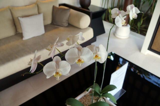 還暦祝いに胡蝶蘭の鉢植え