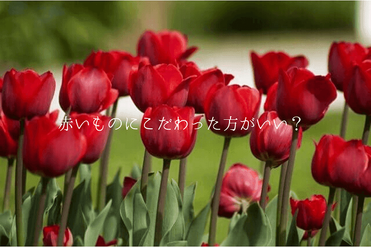 10本以上の赤いチューリップが咲いている様子
