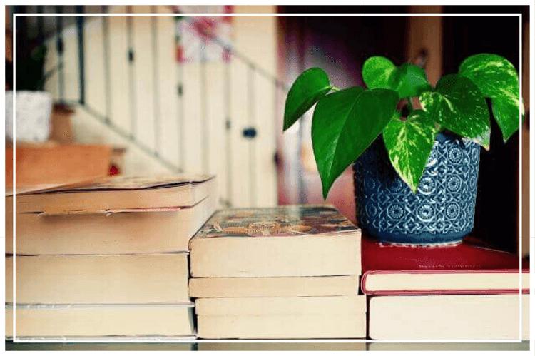 2~5冊ほどの分厚い本の上に鉢植えが置かれている様子