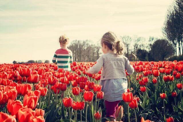 赤いチューリップ畑と子供達