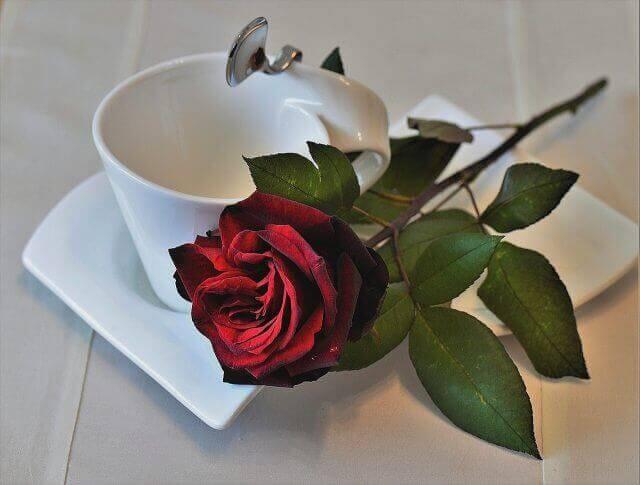 赤いバラ一輪とティーカップ
