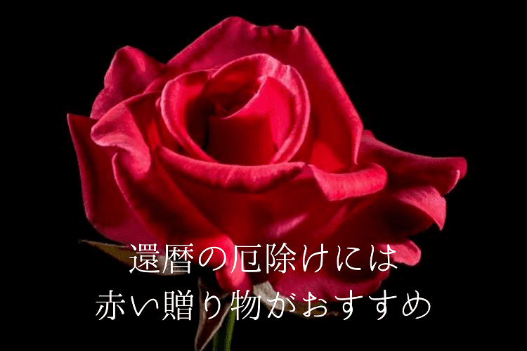 一輪の真っ赤な薔薇のアップ写真
