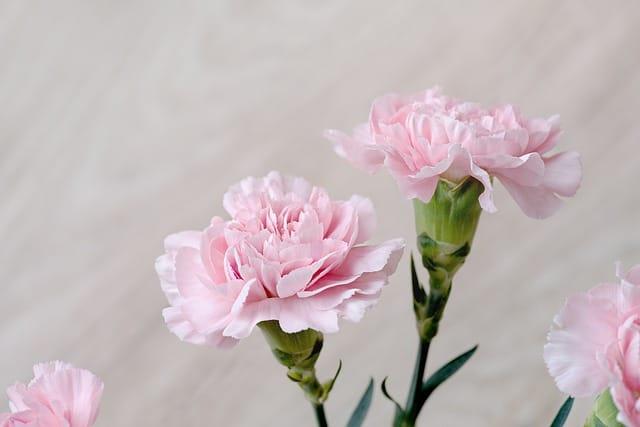 77歳のお祝いに贈りたい花まとめ