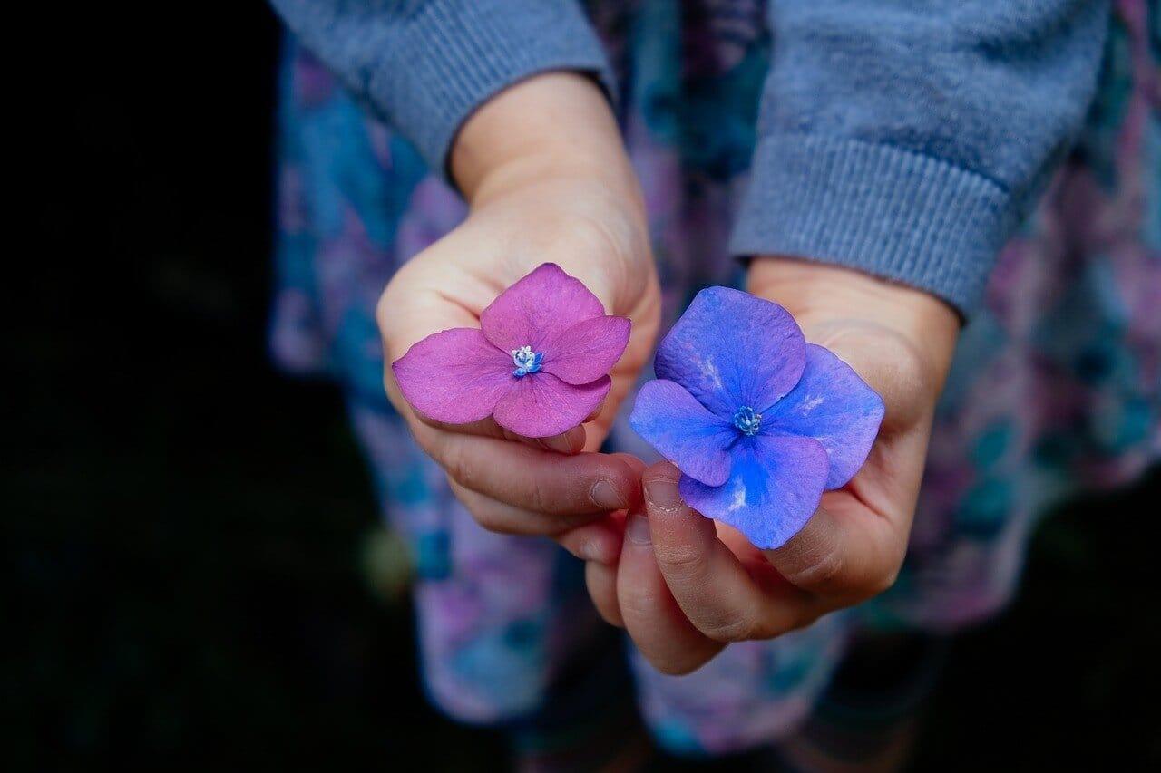 紫色の四葉のクローバー