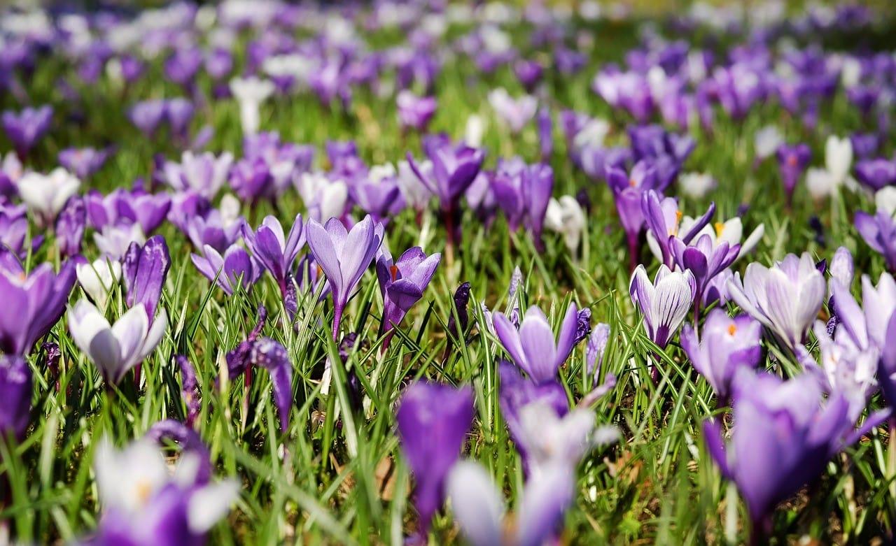 一面紫に包まれた花畑