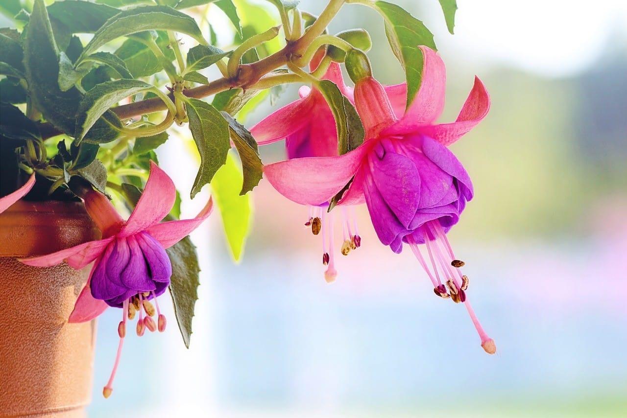 紫色が鮮やかな花