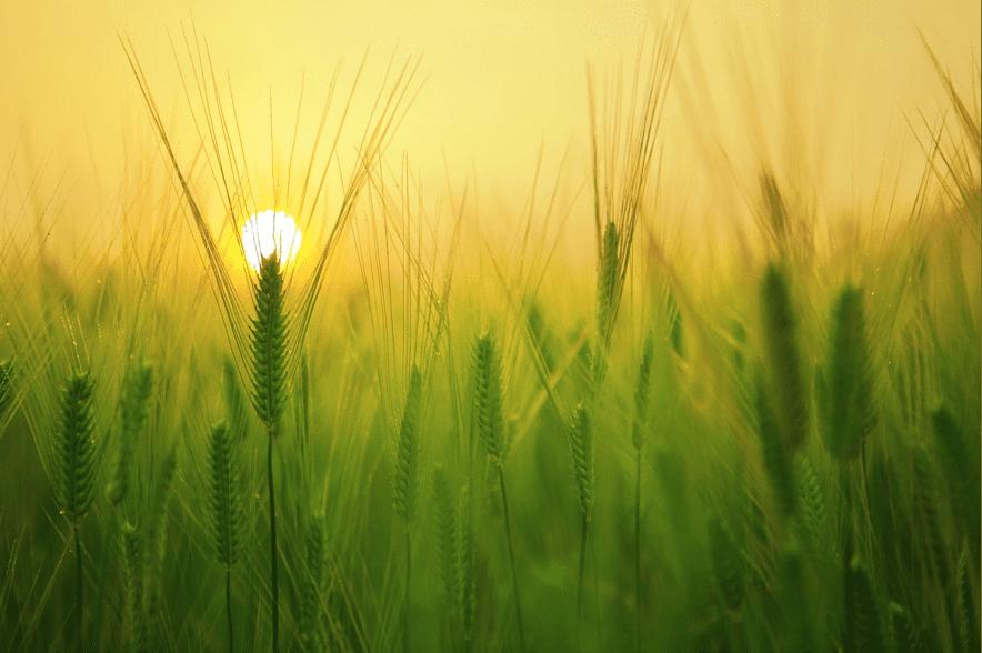晴れやかな夕日のイメージ