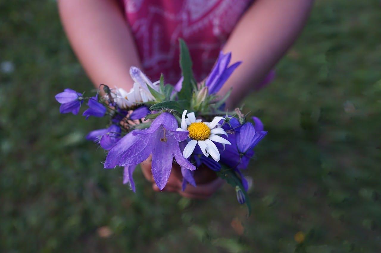 年老いてもなかなか枯れない紫色の花各種