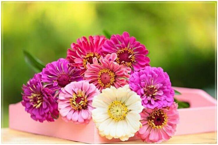 ガーベラっぽい白とピンクの花が木製のピンクの薄い箱の中に入っている