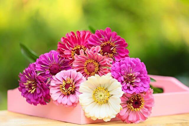 紫中心の彩花