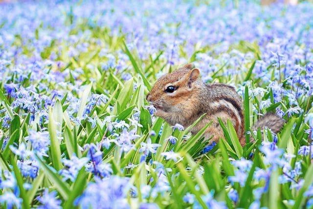 紫色のお花畑にリス