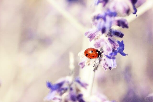 紫色の花とテントウムシ