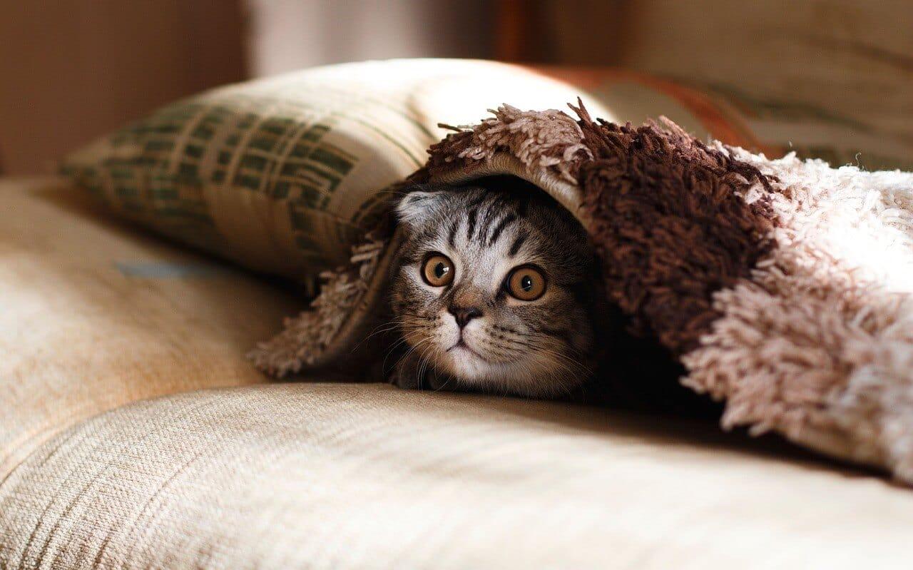 安眠をイメージした布団と猫