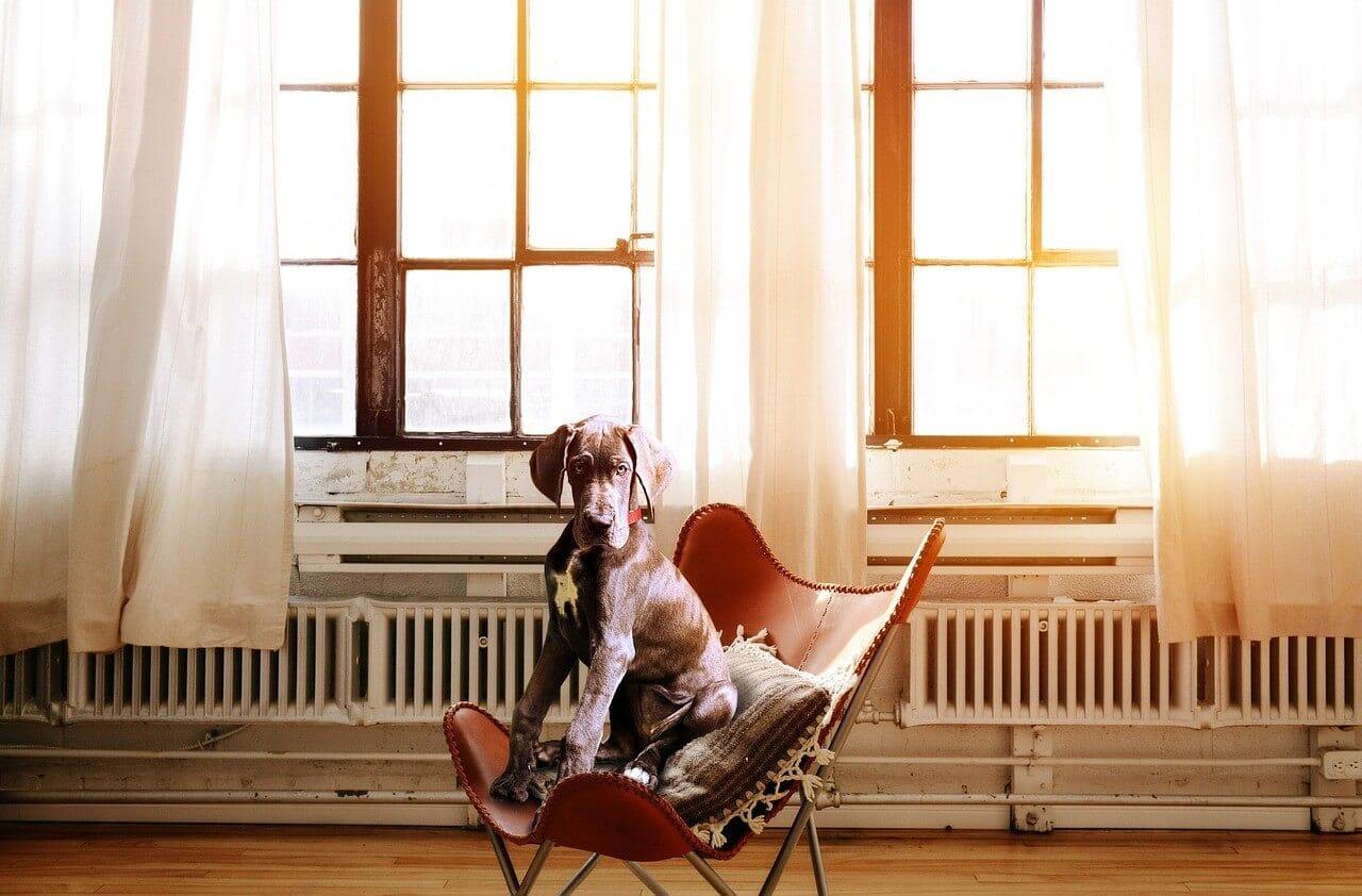 マッサージチェアで休む老犬
