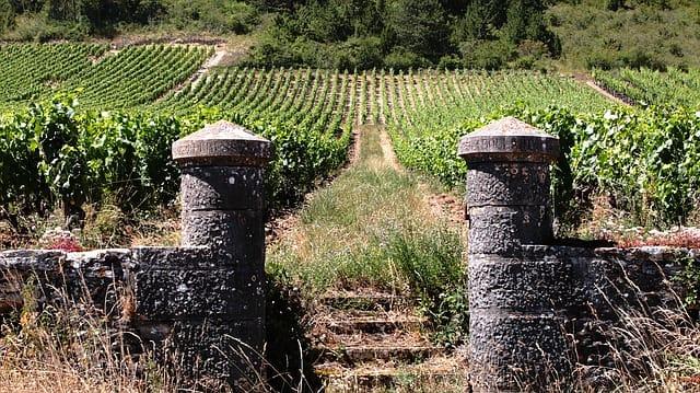 French wine region