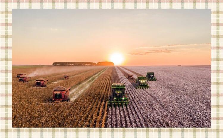 田んぼの稲を刈る耕運機