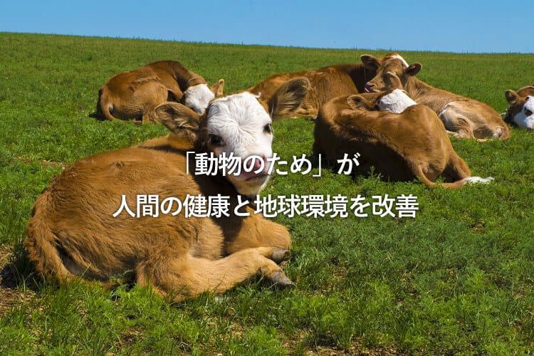 草原で休むたくさんの牛