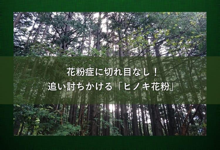 ヒノキの木