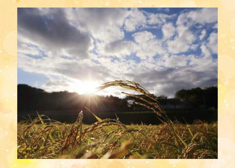 夕方の田んぼの風景
