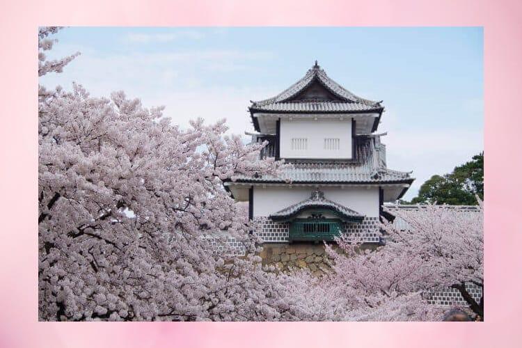 Κάστρο Ishikawa και άνθη κερασιού